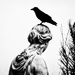 Vrana k vrane sadá.