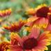 kvety a hmyz