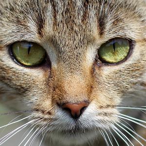 mačka 2