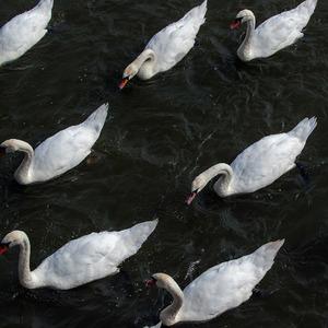L flotila