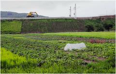 Agro versus Industrial