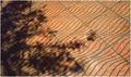 Lietajúci koberec