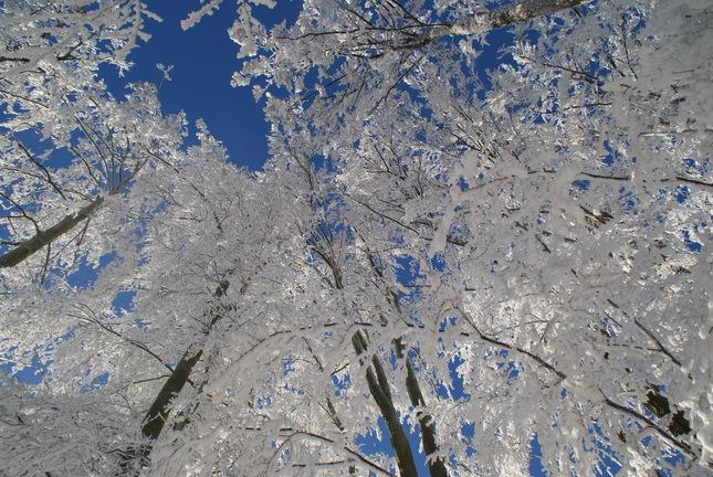 zima na Drozdove