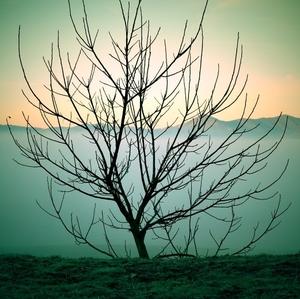 lomo strom