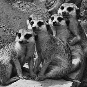 rodinné foto