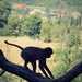 Opica ? U nás !!!???