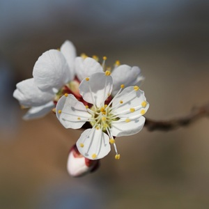 na jar