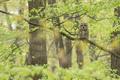 Lesný duch