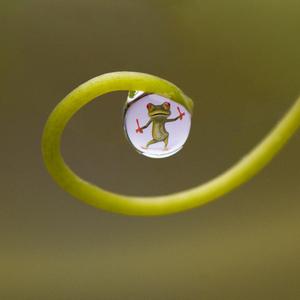 Žaba v kvapke :-)