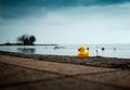 Kačka na brehu jazera