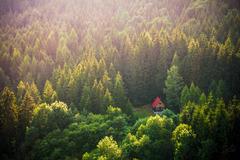 Uprostred lesa