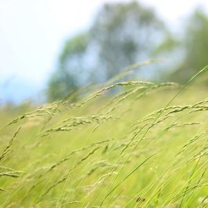 cvak do trávy