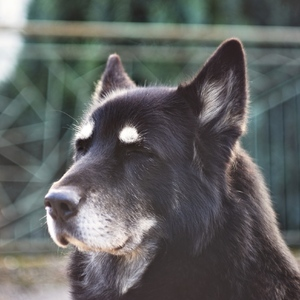 spokojný pes :)