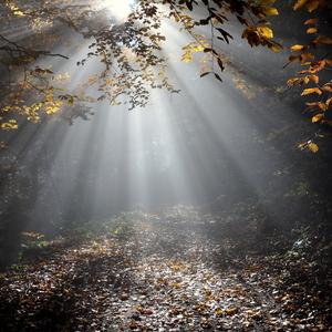 jesenné lúče