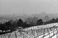 Zima v BA