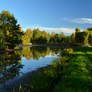 Rybník v októbri