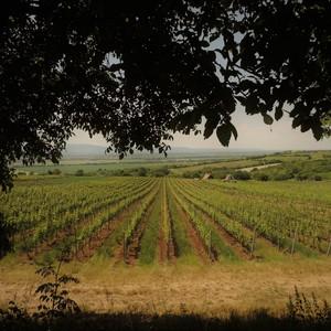 Mužlianske vinice