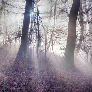 Slnecne pohladenie v lesoch