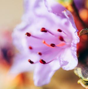 mamkine kvetiny