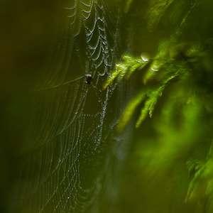 V prítmí lesa