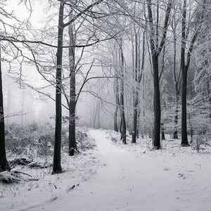 Pokoj zimného lesa