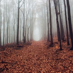Čaro jesenného lesa