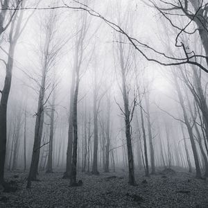 Fog and Solitude B&W 2014