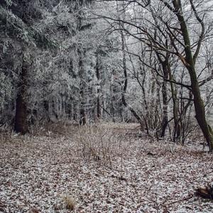 V zimnom šate