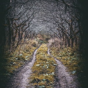Tajomná cesta