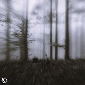 """depressed forest"" 2012"