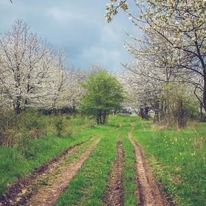 Na jar v sade