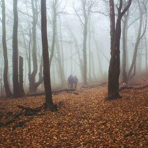 Novembrovým lesom