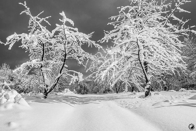 Zasneženou cestou