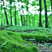 Letná príroda v lese