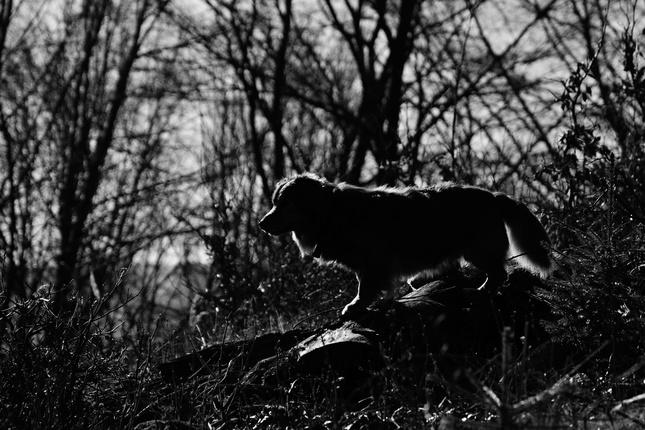 Pozorovateľ