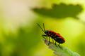 V ríši hmyzu
