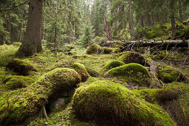 Prales pod Ďumbierom