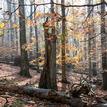 Jeseň v pralese