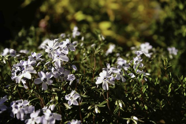 Kvetinový záhon