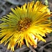Opustený kvet