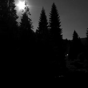 noc na okraji lesa