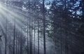 Prebúdzanie lesa