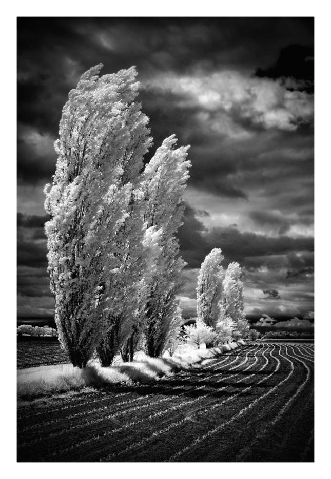Stromy IR