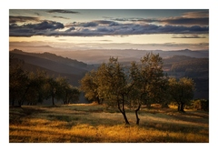 Ráno v olivovom sade