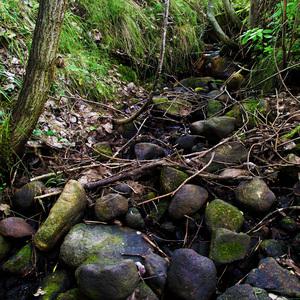 V Strede lesa