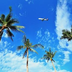 Prelet nad palmovým hniezdom