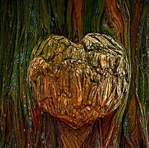 Srdce stromu