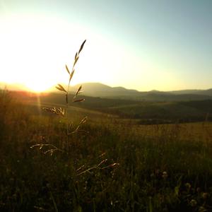 Západ slnka na lúke