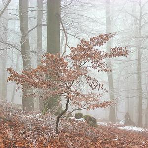 Lesy bratislavské