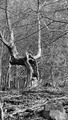 Stromo-výkrik